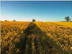 Agrii IFarm trials show increased yield using OMEX starters
