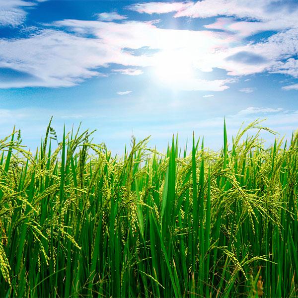 BioHumate - Background Image