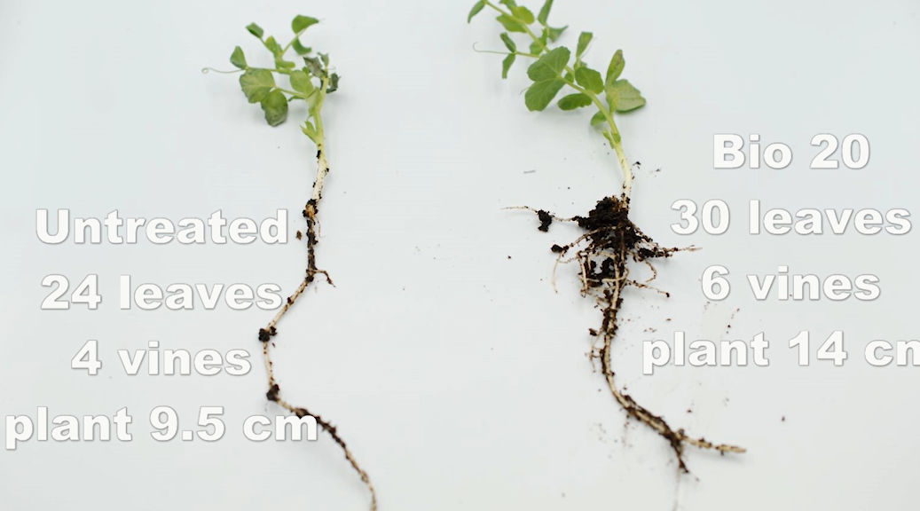 Grow with OMEX Bio 20!