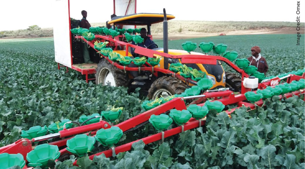 Foliar Feeding Vegetables in Africa's uplands