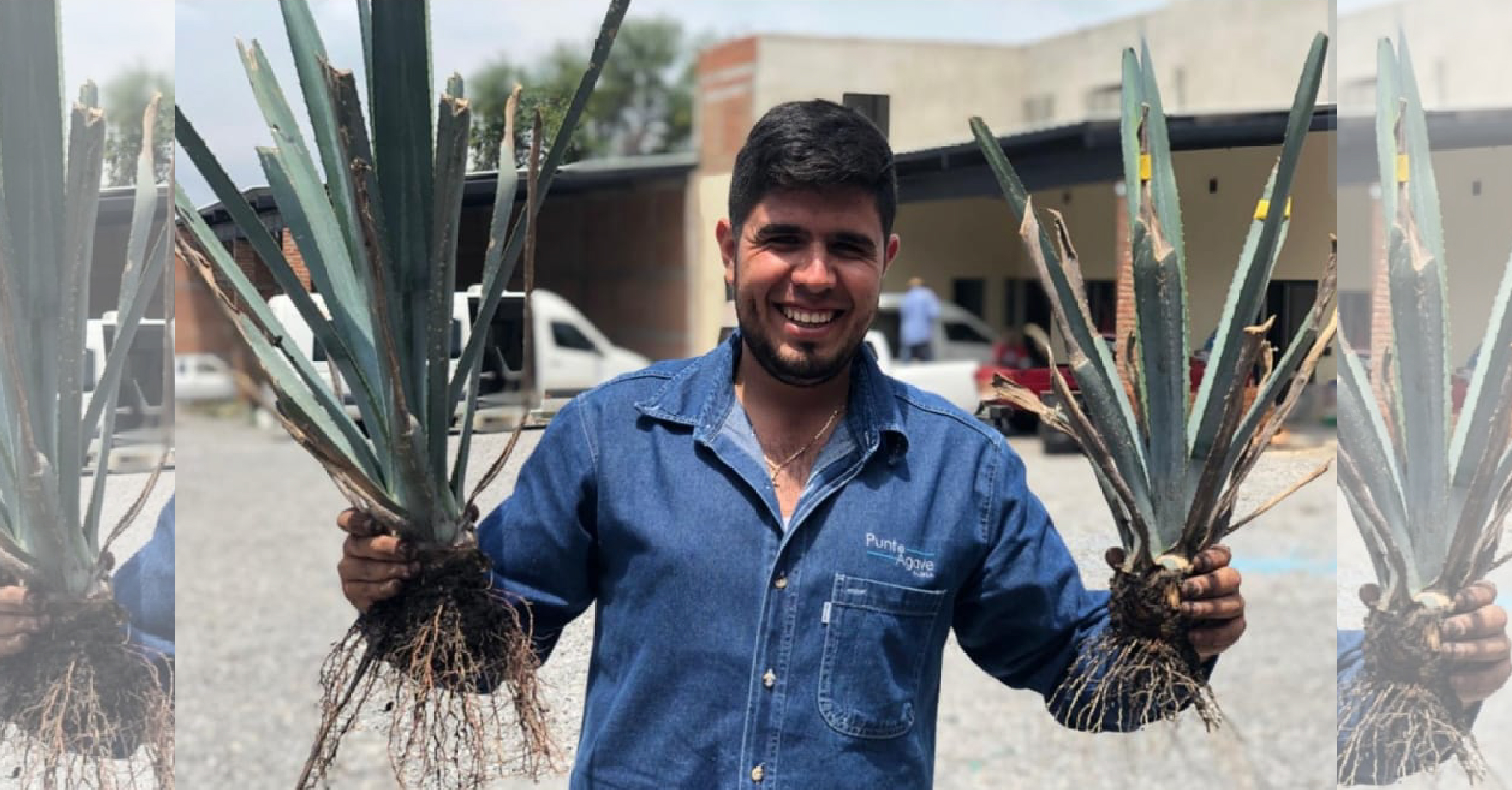 Growing Agave?