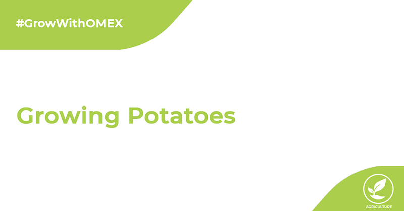 Potato Growing Tips