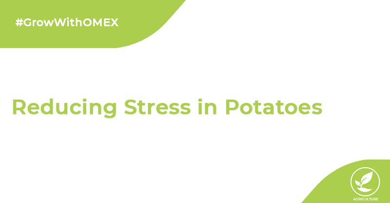 Potato Problems?