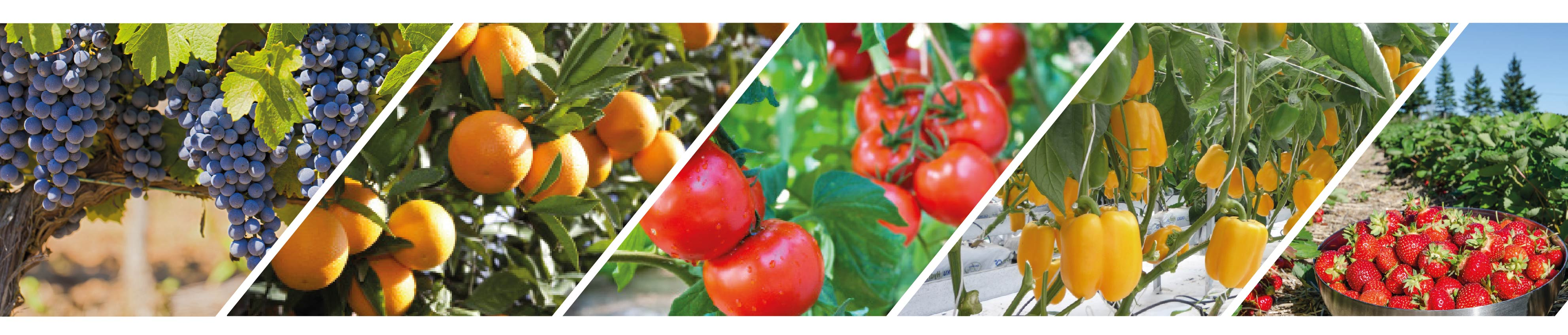 Improve quality of fruit and veg with CalMax