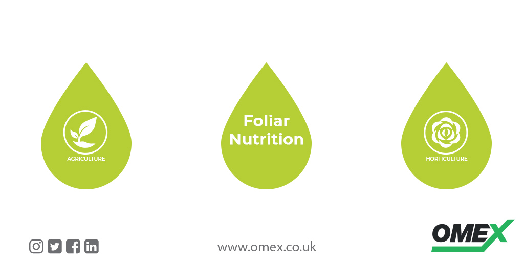 Boosting Plant Health with Foliar Nutrition