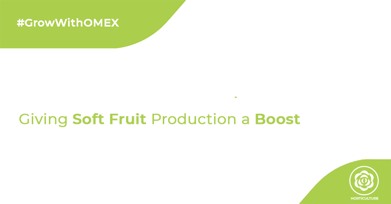 Giving Soft Fruit Production a Boost