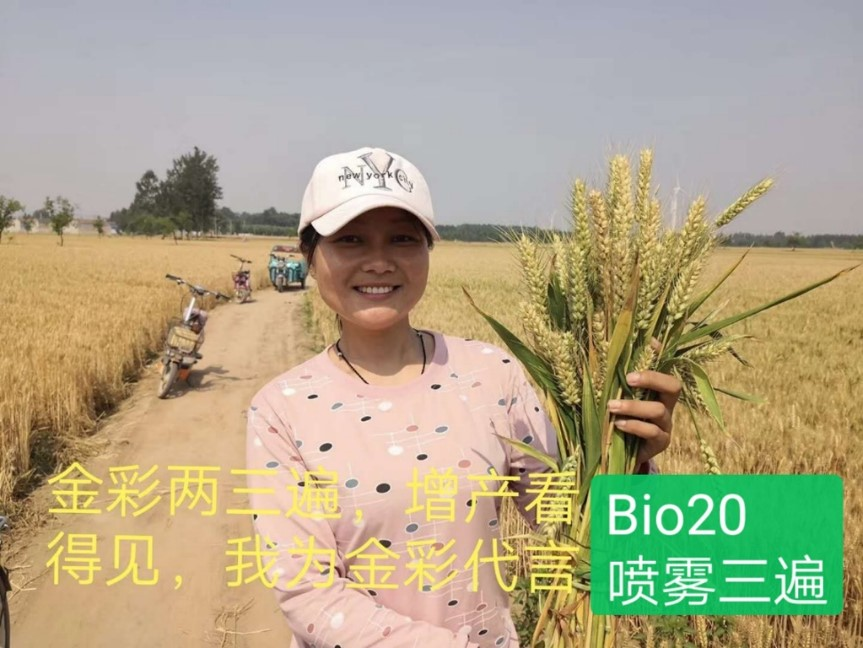 Bio 20 increases wheat yield in China