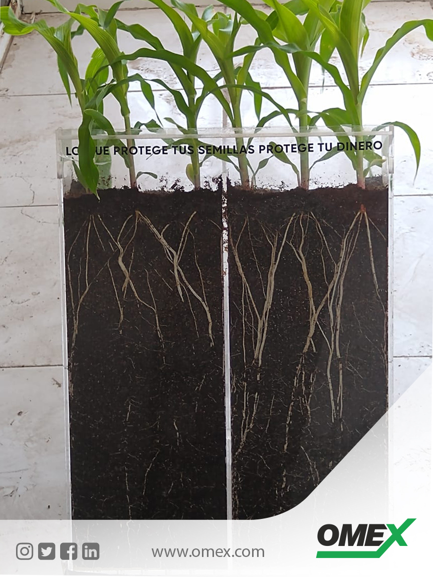 Want a stronger, healthier plant with a better root system??