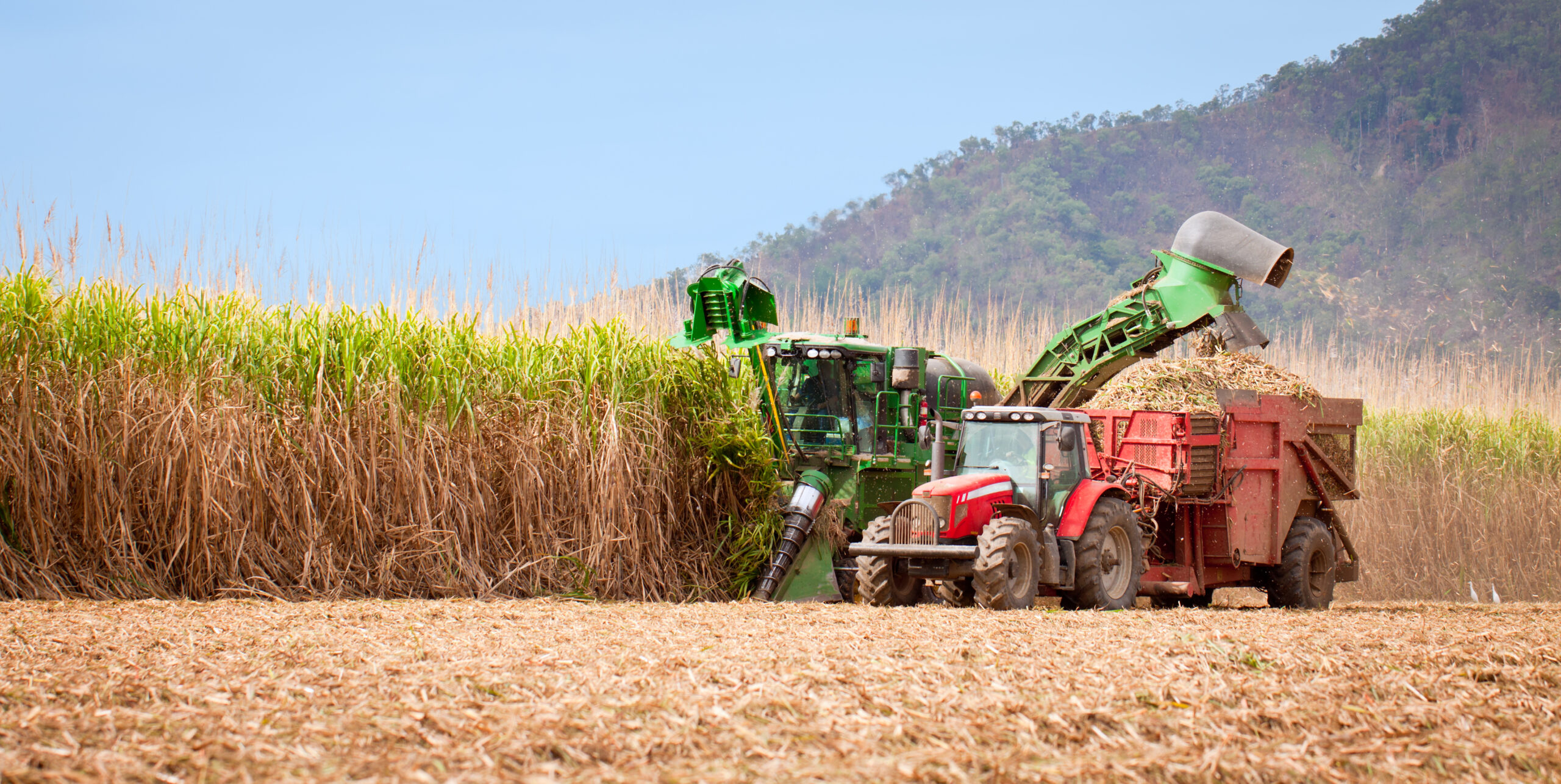 Maximise sugarcane yields by boosting rooting and establishment