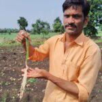 garlic, india