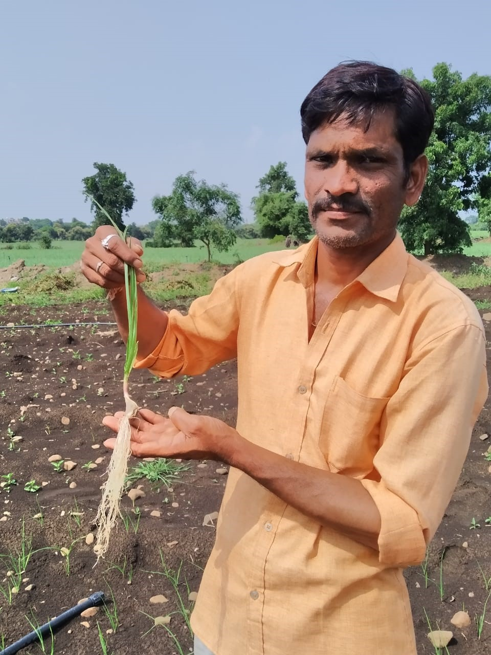 OMEX programme rewards garlic growers in India
