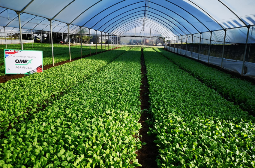 Primer Bio Zn boosts baby spinach growth in Campania, Italy