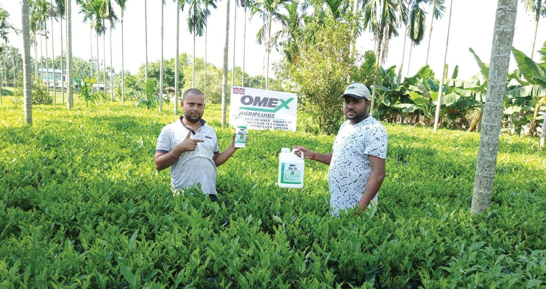 Foliar feeding the OMEX Way – it's time for tea!