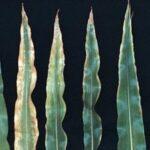 Potassium Deficiency symtpons
