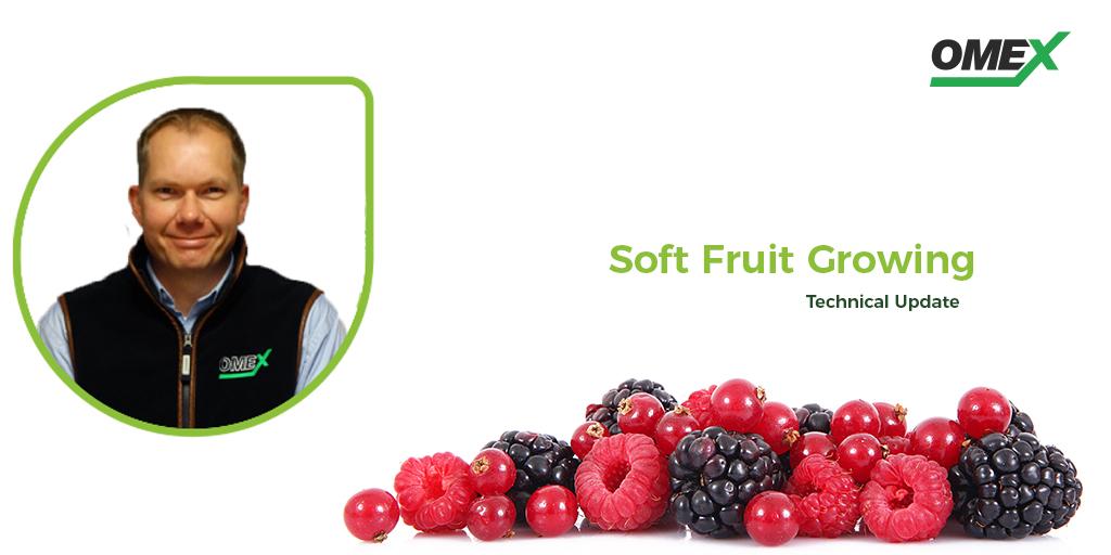 Soft Fruit Neil Holmes
