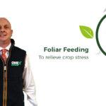 foliar feeding plant health update