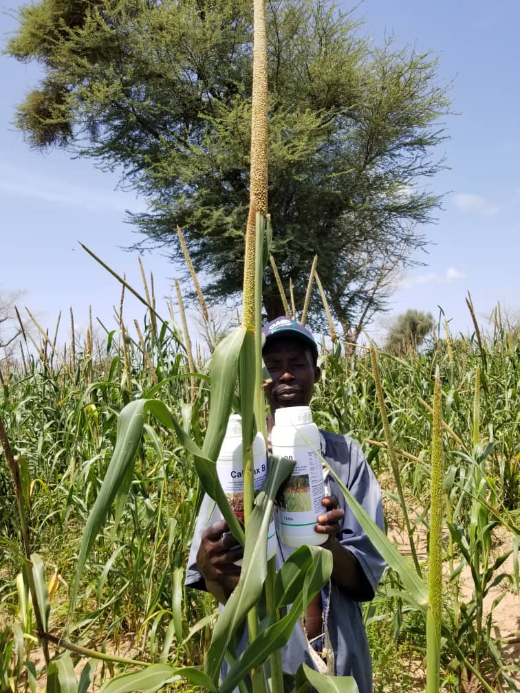 Improving rice, millet and groundnut yield in West Africa