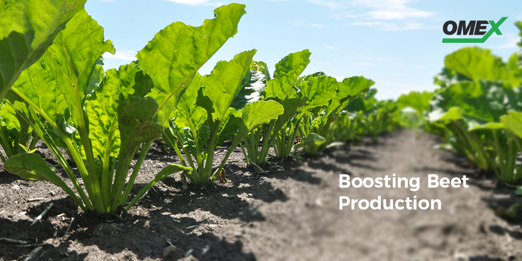 Boosting Beet Production
