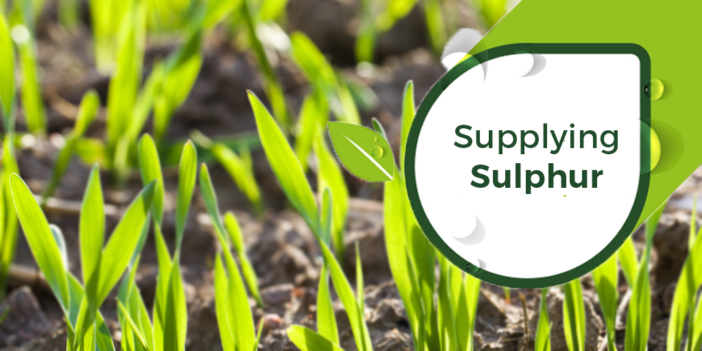 Supplying Sulphur