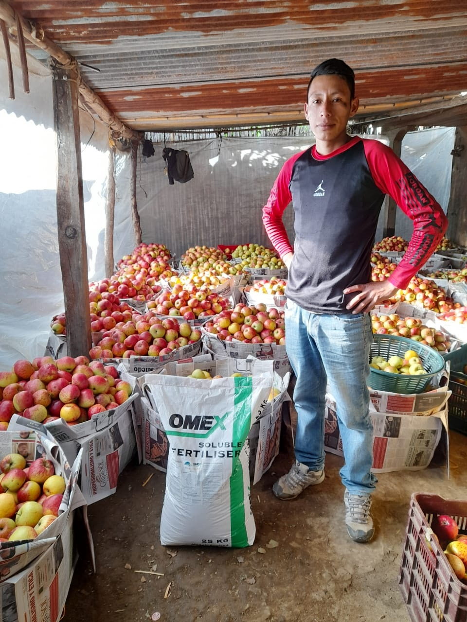 Apples grower Guatemala