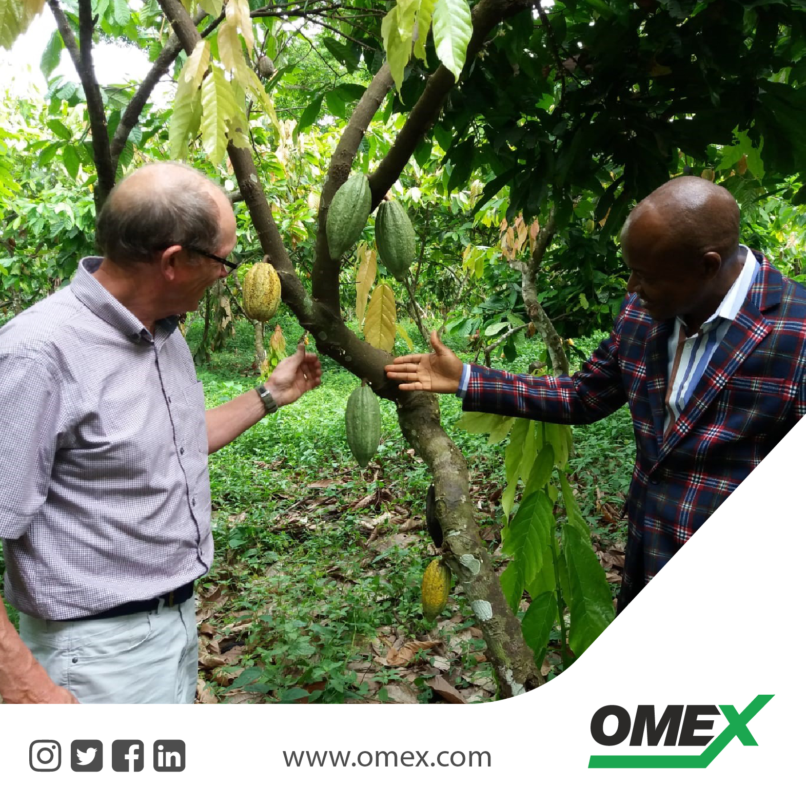 Cocao – Growing with OMEX CocoBoost