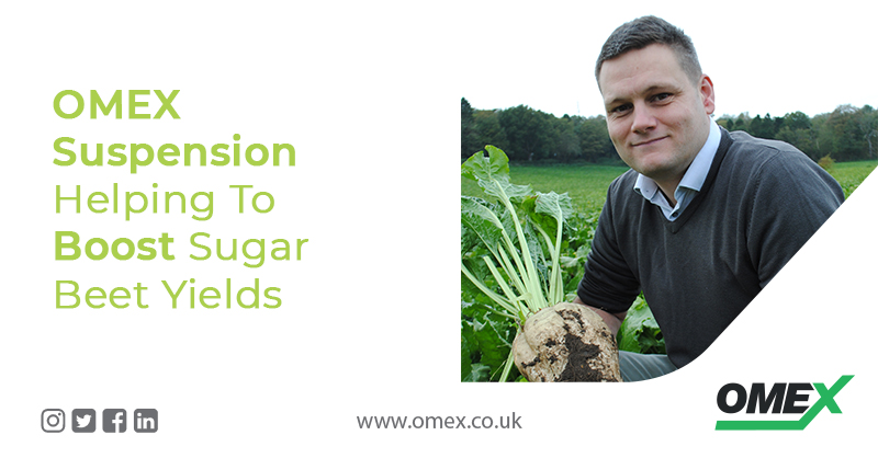 OMEX Suspension Helping To Boost Sugar Beet Yields
